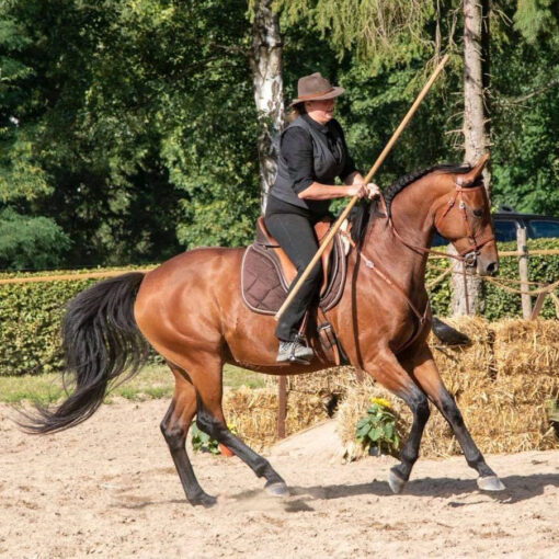 Working Equitation Trailkurs